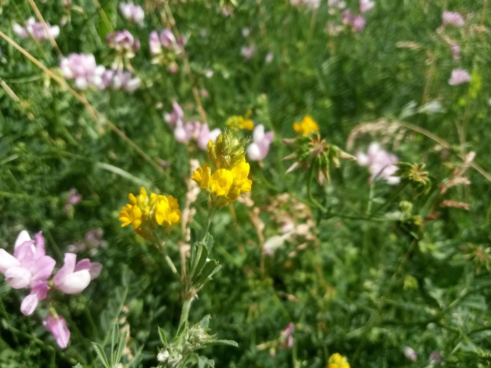 Summer flowers photo