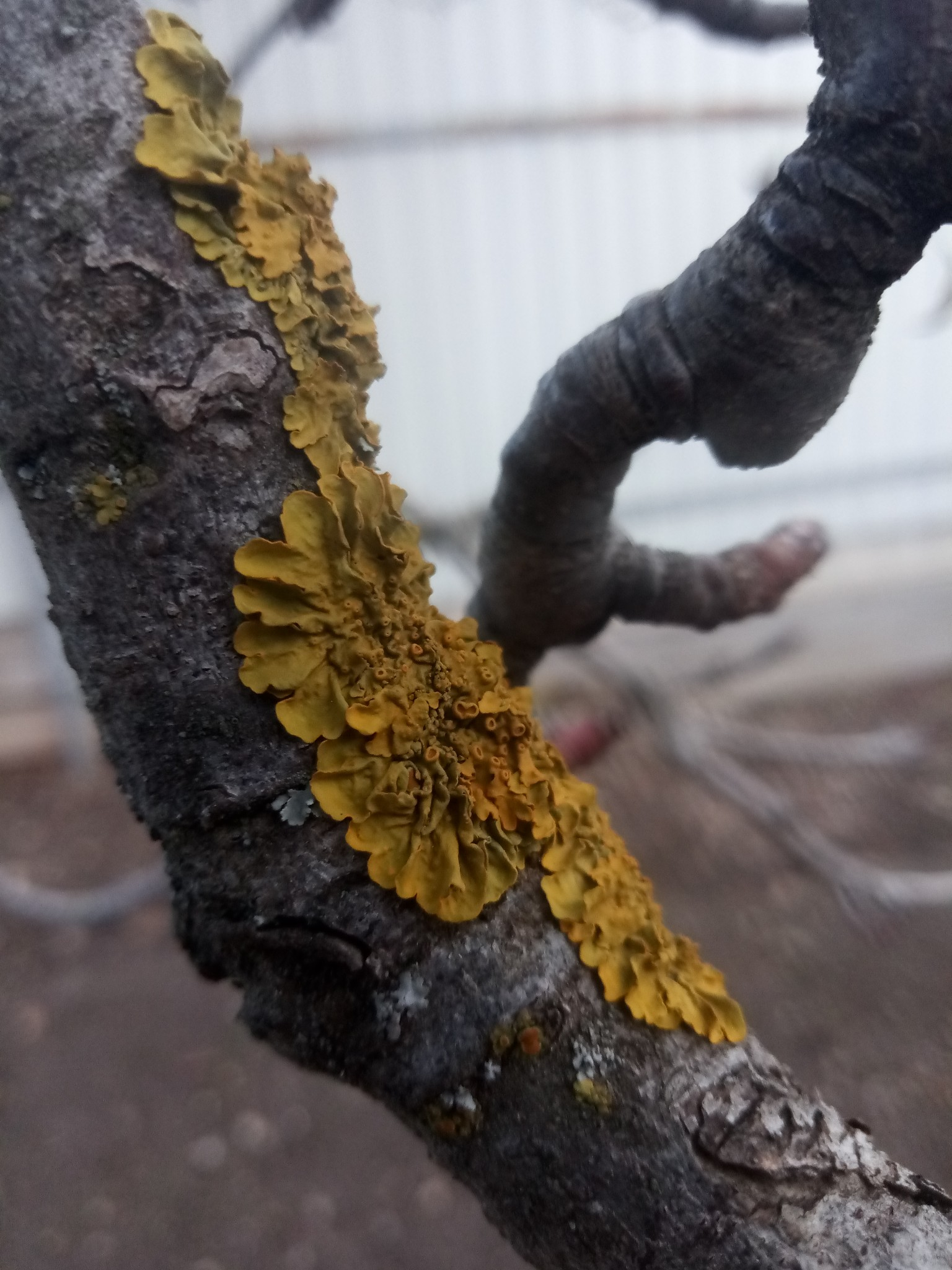 Tree fungus photo